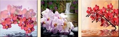 Мини модуль Орхидея ТХ - 61 - фото